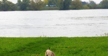 Hundefreiheit: Unterm Lohauser Deich