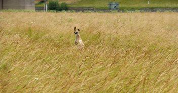 Hundefreiheit: Neusser Rheinwiesen