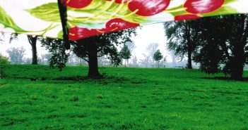 Bild der KW32: Sommerregenschirm