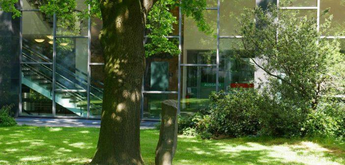 Die einzige der 7000 Beuys-Eichen in Düsseldorf