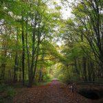 Eller Forst - ein lichter und stiller Wald