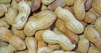 RdW: Erdnüsse (Quelle: Wikimedia)